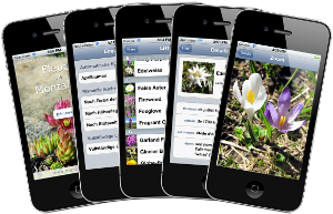 Fleurs de Montagne : le guide découverte des fleurs des Alpes en rando